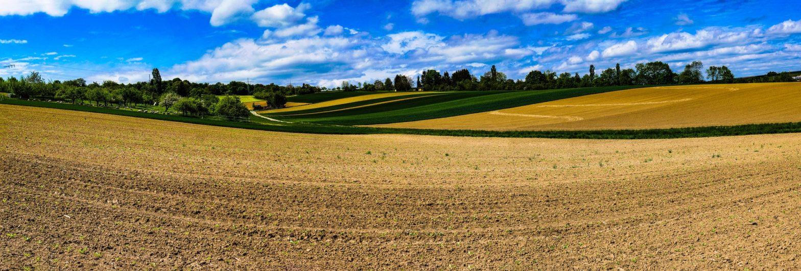 agrarfeld